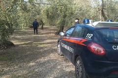 """Ladro di olive arrestato in contrada """"San Francesco"""""""