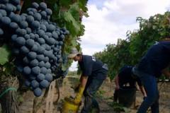 Crescono le vendite di vino pugliese all'estero
