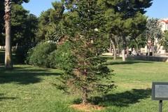 Piantiamo il futuro, mille alberi per l'ambiente. Il 23 gennaio ad Andria