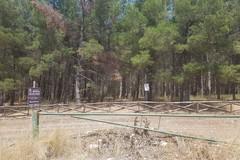 Puglia: 110 mln per investire nelle aree forestali
