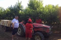 Lavoro, Puglia al top in Italia per lavoro nei campi. Lieve flessione per clima pazzo