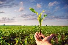 Cresce ancora il consumo di prodotti bio in Puglia