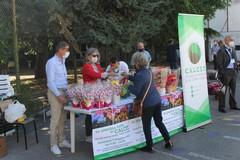"""Calcit, oltre 1500 le """"Piantine del Sorriso"""" che hanno animato la Festa della Mamma"""