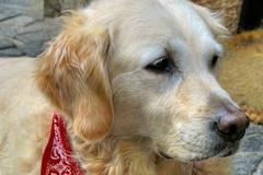 Coronavirus, Caracciolo chiede di riaprire le toelettature per gli animali