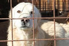 Nuova indagine esplorativa per il ricovero di cani randagi