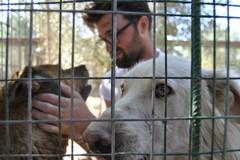 """Canile """"Lillo & Lillo"""": arrivano gli ospiti del Dog's Hostel di Trani"""