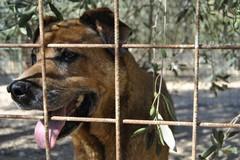 Nuova indagine esplorativa per 287 posti per ricovero di cani randagi