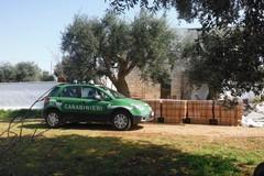 Incendiata l'autovettura privata di un carabiniere forestale