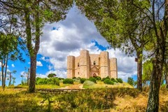 Bosco Finizio e Pineta di Castel del Monte: gara per l'affidamento in concessione della gestione