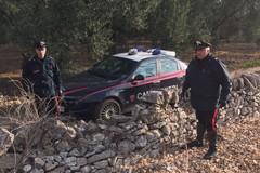 Blitz in Contrada San Francesco, arrestato 27enne mentre asportava 4 quintali di olive da un fondo