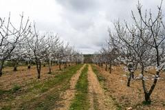 Settimo censimento generale dell'agricoltura: saranno coinvolti anche i Centri di Assistenza Agricola
