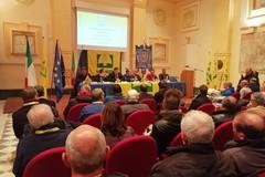 """Olio di oliva, Coldiretti: """"In fumo 1mln di euro per gelate"""""""