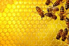 Prosegue la conta dei danni causati dal maltempo: raccolta del miele azzerata