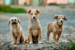 Un video contro l'abbandono degli animali. Al via la nuova campagna di ENPA Bari-Barletta