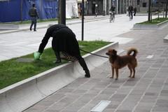 """Strade e muri della città """"impreziositi"""" dalle deiezioni animali"""