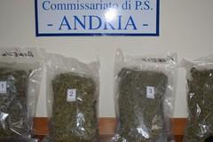 Bitontino arrestato ad Andria con circa kg 4 e mezzo di marjuana