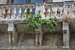 Palazzo Ducale: bisogna salvarlo da un albero di fico