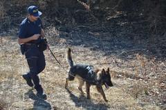 CANOSA | Scomparsa Vassalli, al lavoro i cani molecolari della Polizia