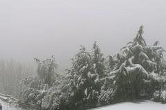 Inizio di primavera con neve e freddo: rischio gelate in campagna per frutti e ortaggi