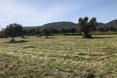 """""""Puglia Federiciana"""" distretto dell'agroalimentare da 100 milioni di euro"""