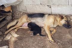 Andria: il dramma dei cani randagi in pericolo di vita