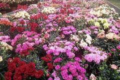 Festa della mamma: fiori per la maggior parte dei pugliesi, ma il 19% non ha regalato nulla per colpa della crisi