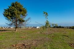Messa a dimora di 3.000 giovani alberi nel Parco Nazionale dell'Alta Murgia