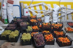 Polizia Locale e Polizia di Stato sequestrano 6quintali di frutta venduta abusivamente