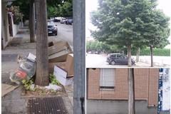 I tigli di via Sofia, tra maleducazione urbana, erronee potature e scarsa considerazione del verde pubblico