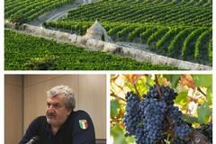 """Per il vino Primitivo scoppia la """"guerra"""" tra Puglia e Sicilia"""