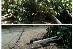 Criminalità, Coldiretti Puglia: «Necessaria cabina di regia tra Ministeri Agricoltura e Interno»