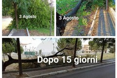 Dopo oltre 15 giorni non viene ancora rimosso un grosso albero caduto in viale Comune di Puglia