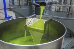 Indagine su falsi olii di oliva svela un problema fin troppo noto