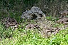 Fase 2 in Puglia: autorizzata la raccolta dei funghi o tartufi