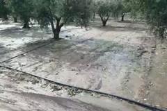 Grandinate su siccità: in Puglia sale il conto dei danni
