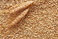 Ribasso prezzo del grano: rischio sopravvivenza aziende agricole