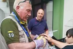 Recuperato un falco grillaio dai Federiciani ad Andria