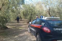 Ritrovato nelle campagne murgiane automezzo rubato a Sannicandro di Bari