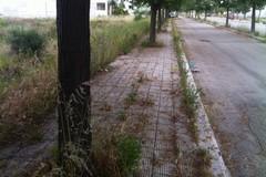 Terreni incolti abbandonati al degrado