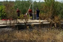 CANOSA | Scomparsa Vassalli, primi possibili sospetti nel registro degli indagati