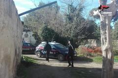 Stretta dei carabinieri sui furti di olive: già sventati due nelle campagne di Andria
