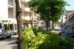 Potatura alberi: divieti al traffico veicolare su via Padre Savarese dal 3 al 5 giugno