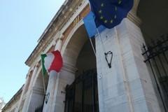 Andria, crisi olivicola: convocato il Consiglio Comunale in seduta straordinaria