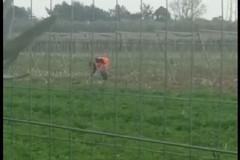 Video spopola in rete: operatore ecologico intento a raccogliere verdura