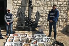 Sequestro di pesce non tracciabile ed in cattivo stato di conservazione