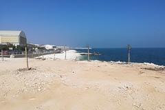 L'alga tossica torna sul litorale di Bari, livelli alti da Santo Spirito a San Giorgio