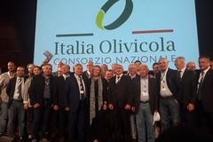 Allarme per il settore olivicolo: il 75% dei campi ancora senza interventi