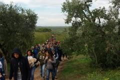 Camminata tra gli olivi: la tappa nella Bat sarà domenica 24 ottobre ad Andria