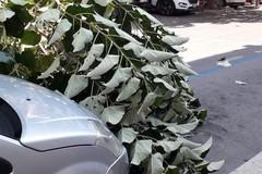 Caduta accidentale grosso ramo di albero in via Bari