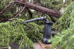 Violenta tromba d'aria ad Andria, abbattuti diversi alberi. VIDEO